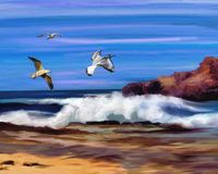 Sky, Sea, Seabird, Wave royalty free stock images