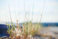 Sky, Sea, Water, Grass stock image