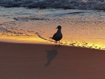 Sky, Shore, Water, Sand stock photo
