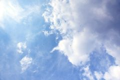 Sky with skydivers stock image