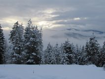 Sky, Snow, Winter, Tree royalty free stock photo