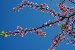 Sky spring Royalty Free Stock Images