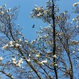 Sky in spring Stock Image