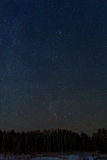Sky star forest panorama royalty free stock photo