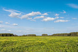 Sky and summer fields Royalty Free Stock Photos