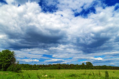 Sky summer on meadow Royalty Free Stock Photo