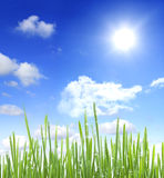 Sky sun and grass with water drops. Sky, clouds, sun and grass with water drops Stock Image
