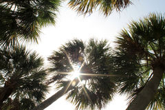 Sky sun and palm trees Stock Images