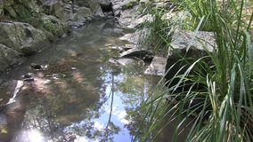 Sky and sun reflected in the water of West Ithaca Creek, Brisbane Australia. stock video