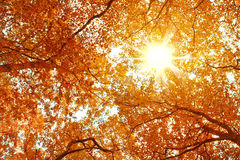 Sky and sun in the trees. Stock Image