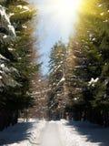 Sky   sun  wood Stock Images