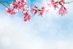 Sky in sunny day with white clouds Royalty Free Stock Images