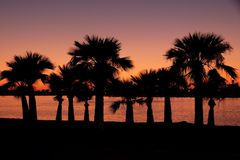 Sky, Sunset, Palm Tree, Arecales Royalty Free Stock Image