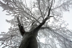 Sky sunshine through the winter tree branches (from below). Royalty Free Stock Photo