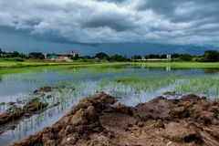 Sky terrible clouds clumping rain began to fall late in the rice Stock Image