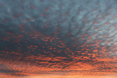 Sky with tiny fleecy clouds and sunset afterglow Royalty Free Stock Image