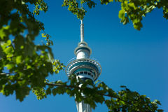 Sky Tower Auckland through trees Royalty Free Stock Photo