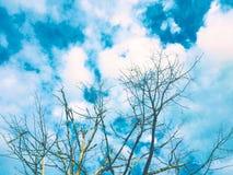 Sky&tree Obrazy Royalty Free