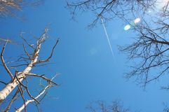 Sky and tree, blue sky and grtane with fallen leaves Stock Photo