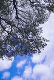 Sky, Tree, Branch, Cloud stock photo