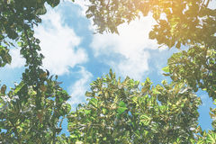 Sky with tree branch. Tree branch under blue sky with sunlight Stock Photography