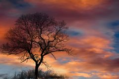 Sky, Tree, Cloud, Red Sky At Morning Royalty Free Stock Images