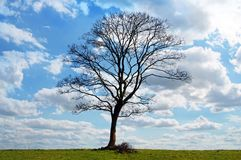 Sky, Tree, Cloud, Woody Plant Royalty Free Stock Photos