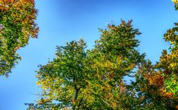 Sky, Tree, Leaf, Nature stock images