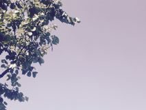 Sky with tree leaves. Branches of apricot against a background of the blue sky Stock Images