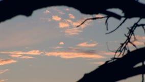 Sky Through The Tree 01 stock video