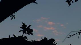 Sky Through The Tree 02 stock footage