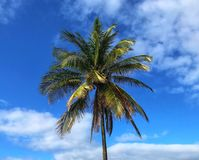 Sky, Tree, Palm Tree, Arecales Royalty Free Stock Images