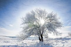 Sky, tree and snow Royalty Free Stock Images