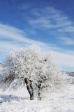 Sky, tree and snow Stock Photo