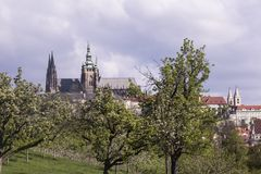 Sky, Tree, Spire, City Stock Image