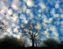 Sky and tree. View from breakage Royalty Free Stock Photos
