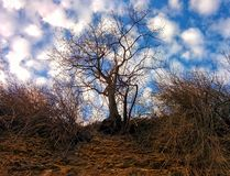 Sky and tree. View from breakage Stock Images
