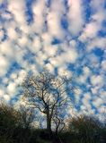Sky and tree Stock Photography
