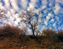Sky and tree. View from breakage Stock Photos