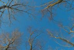 Sky trees Royalty Free Stock Photography