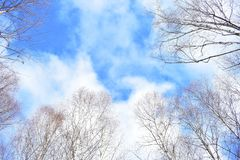 Sky and trees stock photography