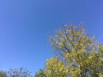 Sky, trees. Blue sky, up view on trees. Nature Stock Photo
