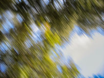 Sky and Trees Blur Royalty Free Stock Images