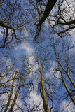 Up. Sky through the trees. Chenonceaux, sky through the trees in December Stock Photography