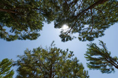 The sky through the trees. Royalty Free Stock Images