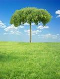 Sky, trees and grass Stock Photos