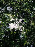 Sky through the trees royalty free stock photos