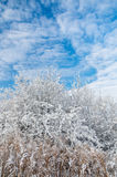 Sky and trees at winter time. Sky with clouds and frosted trees in winter time Royalty Free Stock Photography