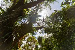 Sky through the treetop canopy royalty free stock photo