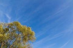 Sky and treetops of autumn Royalty Free Stock Photo